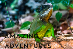 Amazing Adventures - DD39 - Featured Image