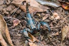 Scorpion 01