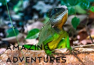 amazing-adventures-dd39-featured-image